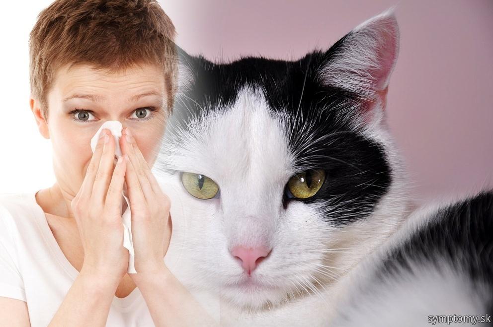 Alergia k mačke
