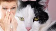 Alergia zvierat