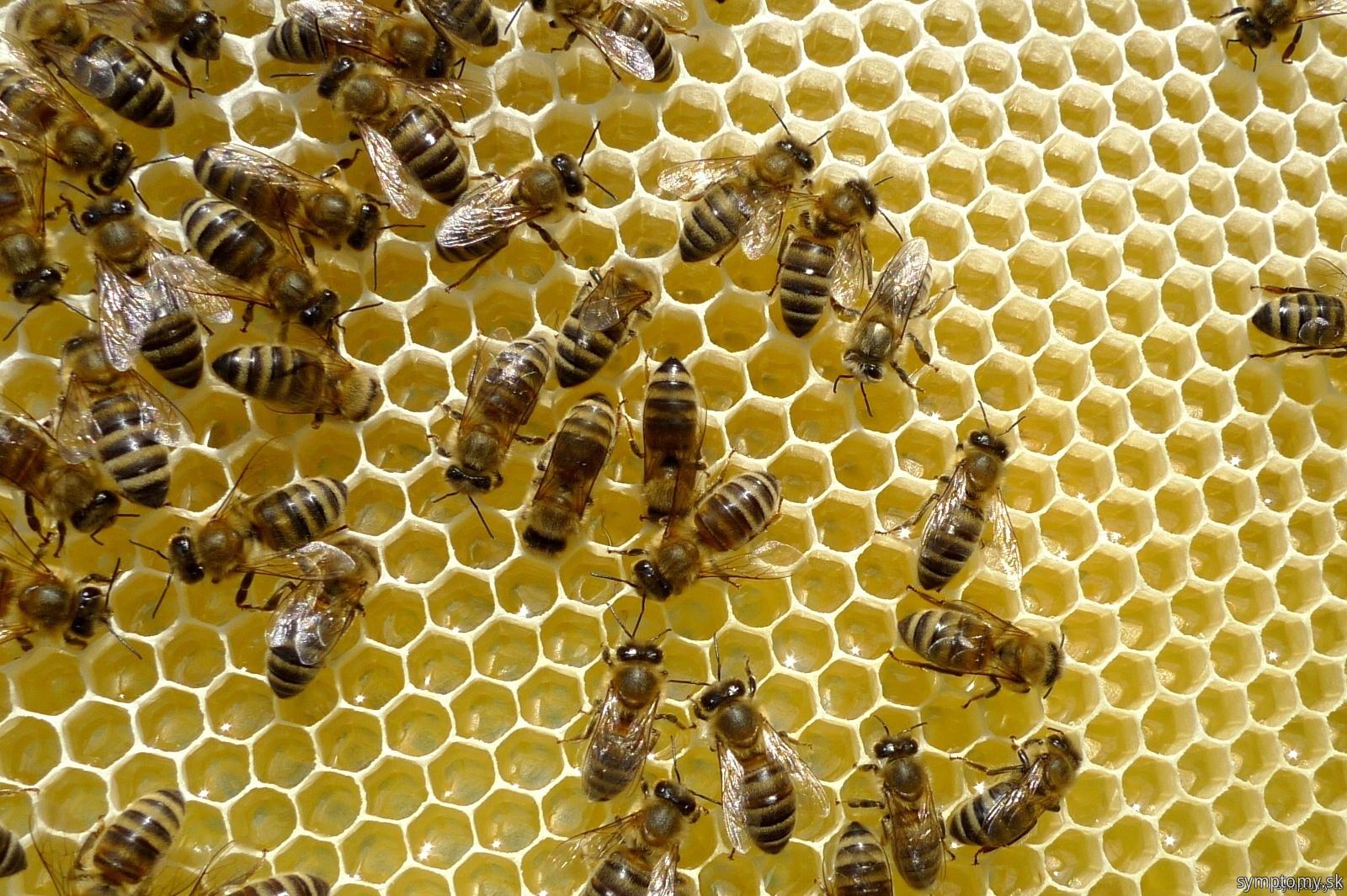 Včelí plást