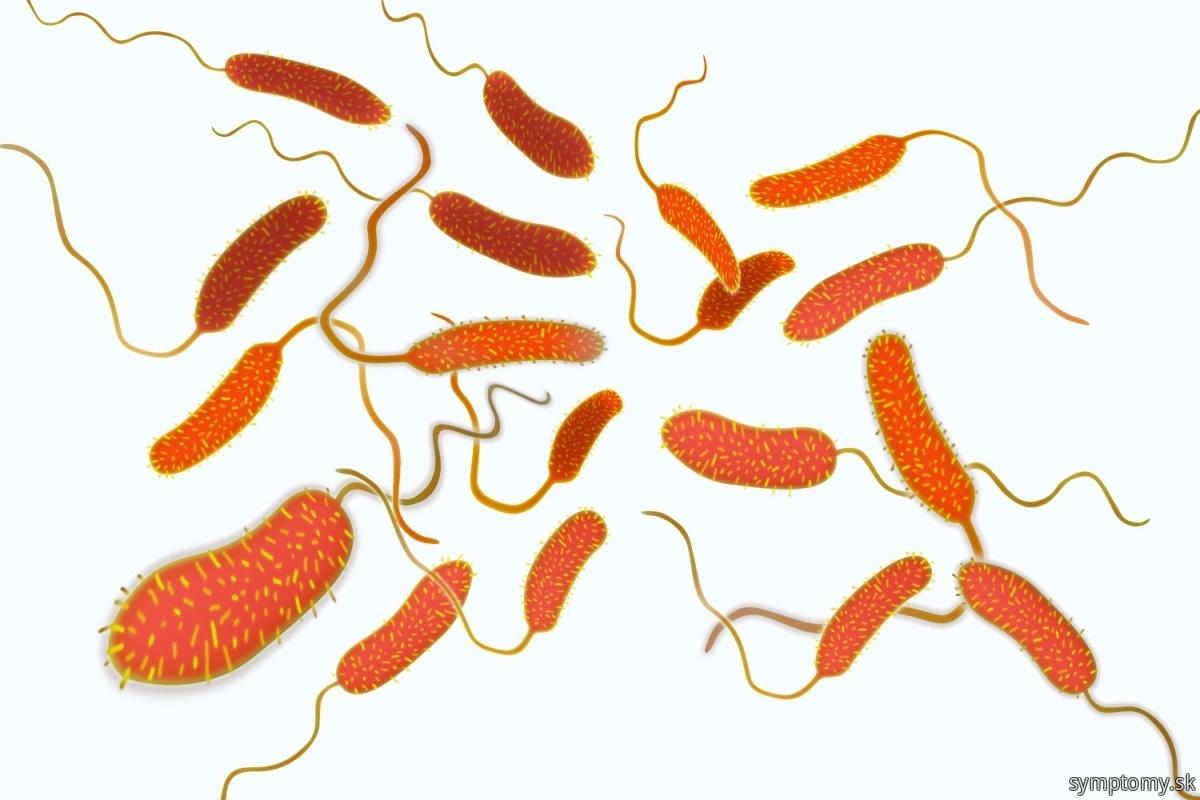 Baktérie-Vibrio-cholerae-pôvodcu-cholery