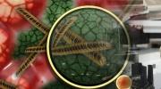 Mykoplazmovej infekcie