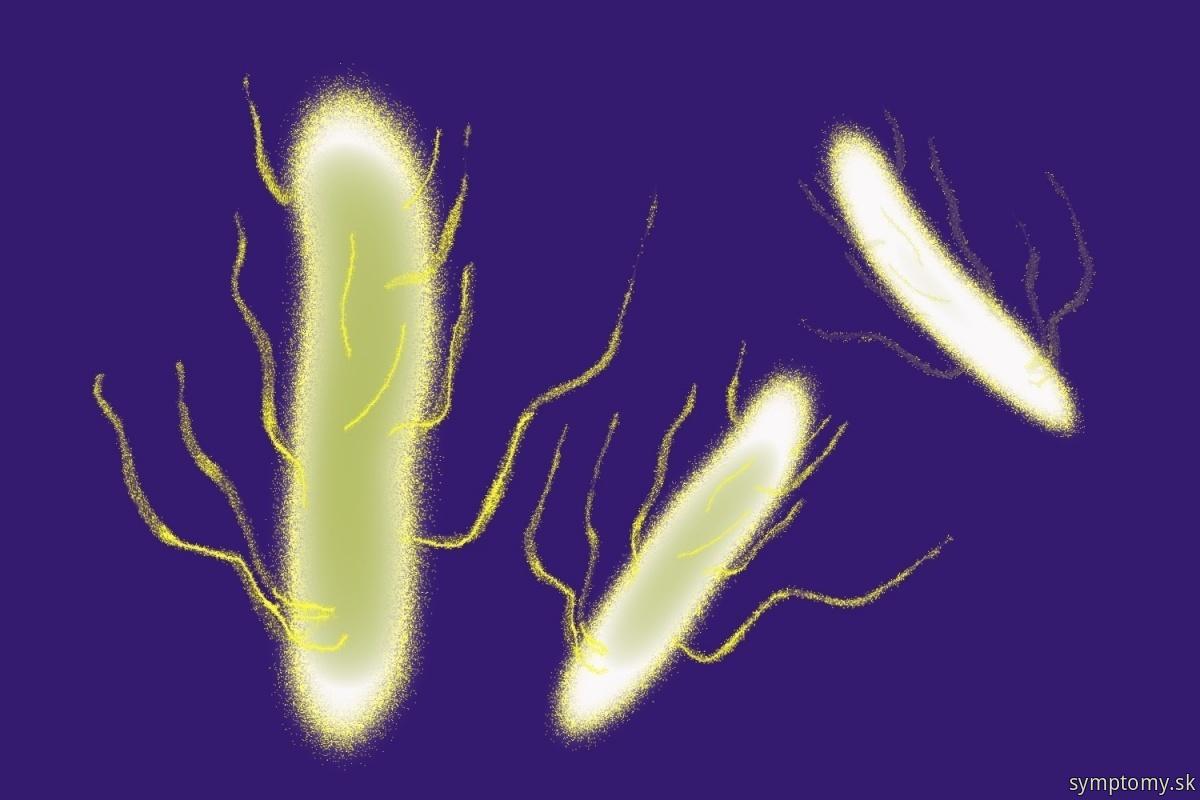 Baktérie-Salmonella-enteritidis