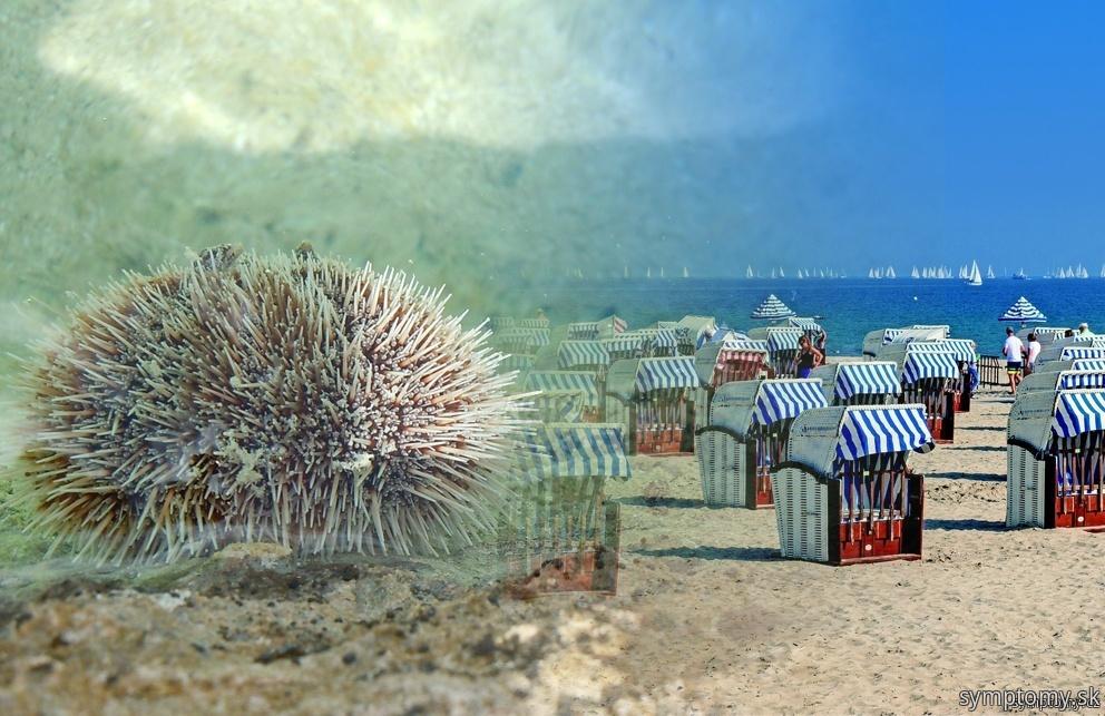 Holotúrie a ježovky