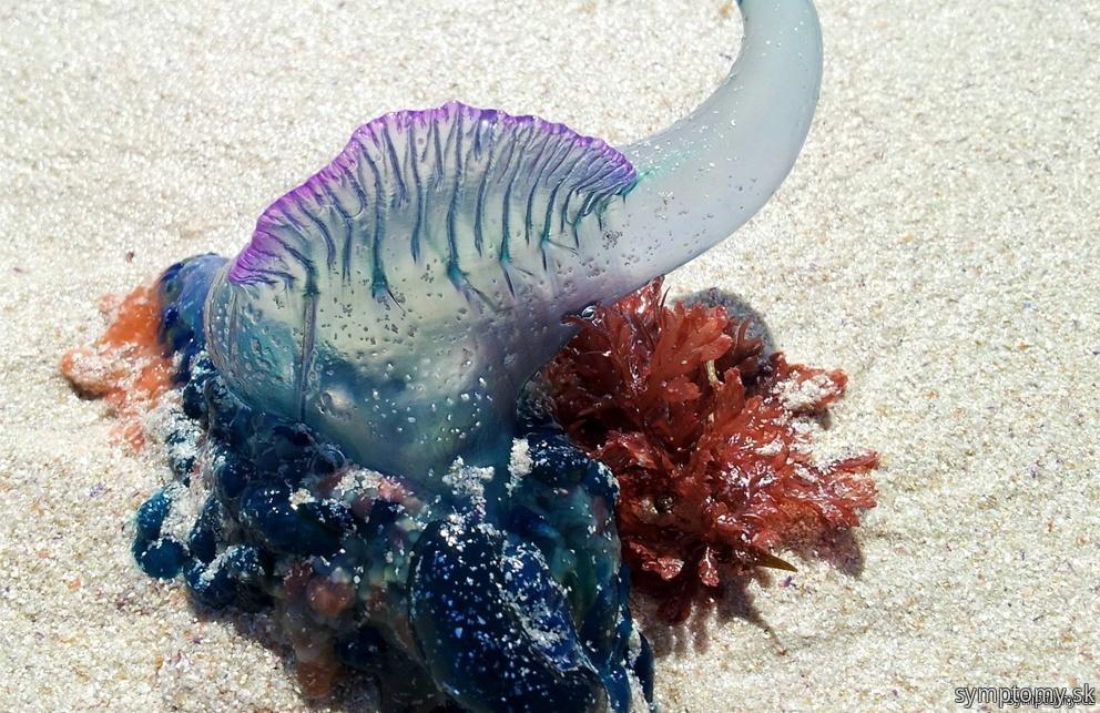 Jedovaté živočíchy v mori