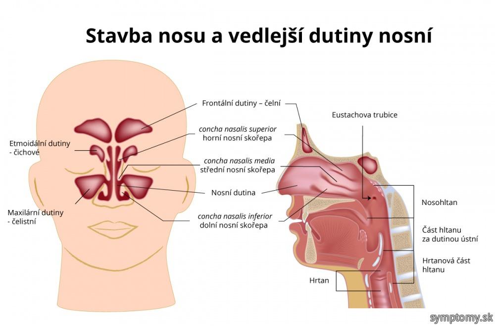 Nos a nosná dutina