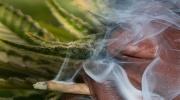 Otrava marihuanou