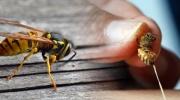 Otravy blanokrídlym hmyzom