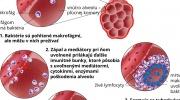 Infekcie - mycobacteriem tuberculosis